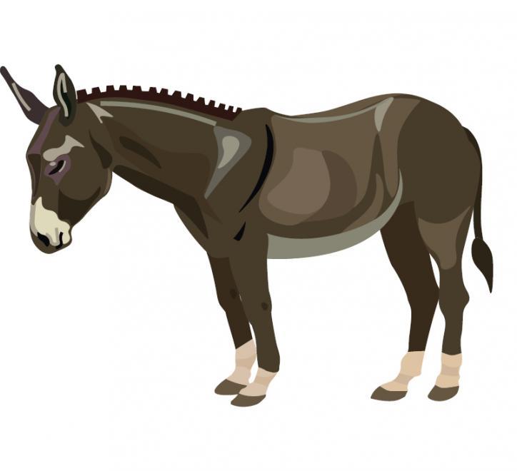 A Donkey image