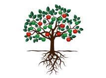 4 Fruit Trees