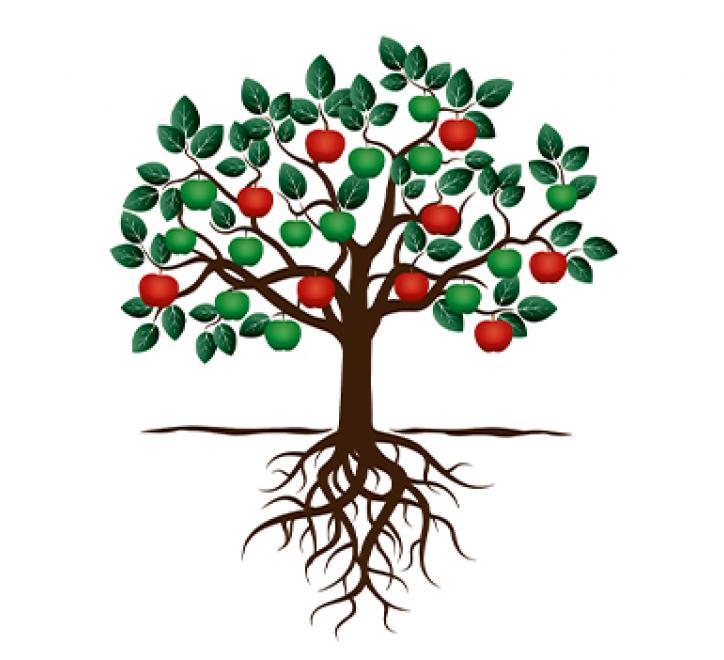 4 Fruit Trees image