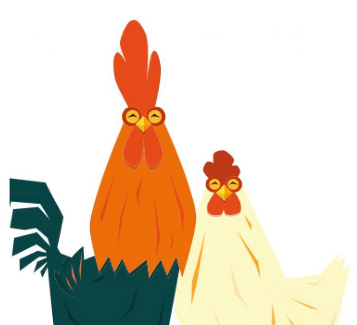 Chickens image
